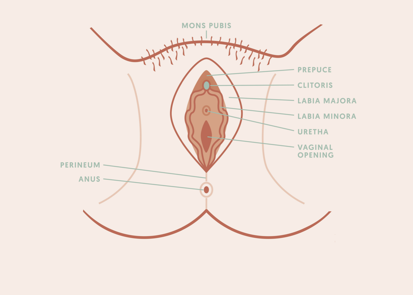 4 Things You Didnt Know About Your Vulva Intimate Talk